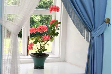 Корисні кімнатні рослини для дому